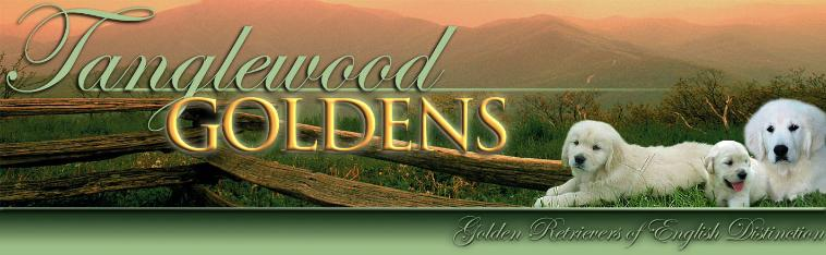 Tanglewood Goldens -- Golden Retrievers of English Distinction
